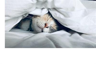 睡眠管理小貼士